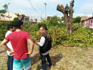 Polícia Civil apura crime ambiental em praça de Teresina que teve todas as árvores cortadas.