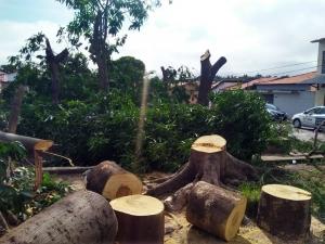 Polícia diz que árvores de praça foram cortadas porque local era ponto de encontro de 'vândalos'